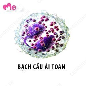 Bạch cầu ái toan (bạch cầu ưa acid)