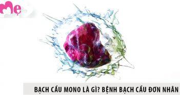 Bạch cầu mono là gì? Bệnh bạch cầu đơn nhân và cách chữa
