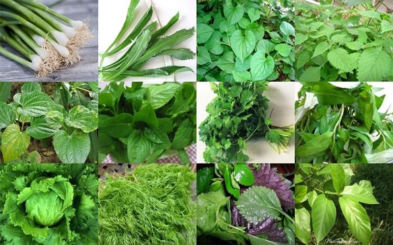 Một số loại rau ăn lá phổ biến