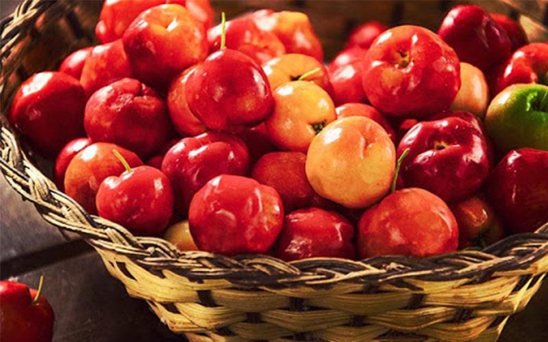 Những trái sơ ri đỏ mọng rất giàu vitamin