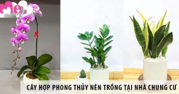 5 loại cây hợp phong thủy nên trồng tại nhà chung cư