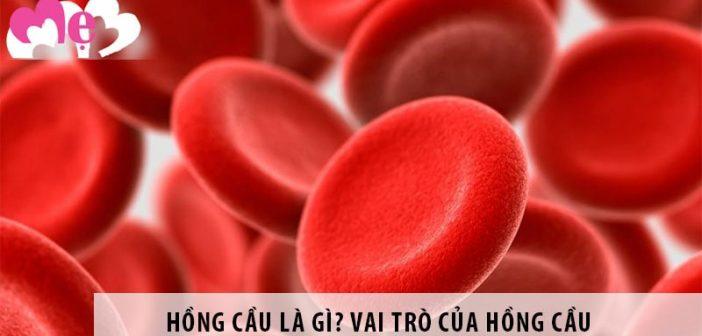 Hồng cầu là gì? Vai trò của hồng cầu đối với con người