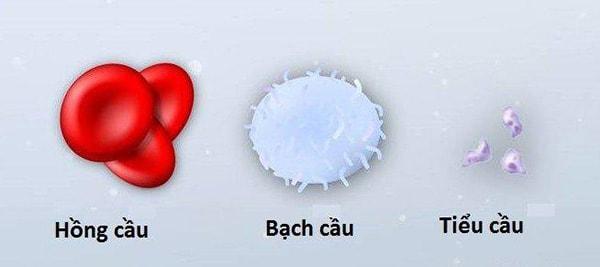 Tiểu cầu là 1 trong 3 loại tế bào máu cơ bản quan trọng trong cơ thể con người