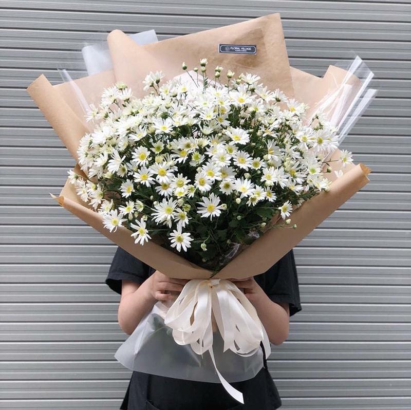 Hoa cúc họa mi được coi là biểu tượng của tình yêu lâu dài