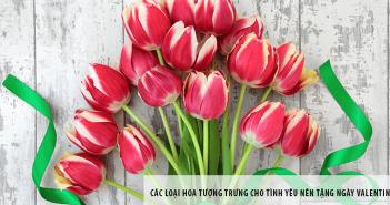 Các loại hoa tượng trưng cho tình yêu nên tặng ngày Valentine