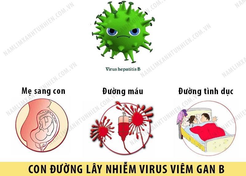 Các con đường lây nhiễm của bệnh viêm gan B